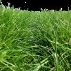 Foliar Fertiliser