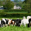 Clostridial Diseases Farming Note