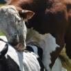 Man or Beast Farming Note