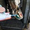Hoof Blocks Tried & Tested Report 2019