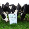 New Spring Grass Seed Prices