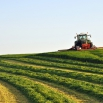 Management Following 1st Cut Silage