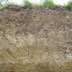 Improving Soil Structure for Maize Farming Note