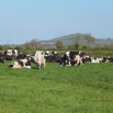 Complementing Early Spring Grass Farming Note