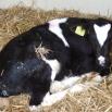 Coccidiosis Farming Note