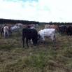 Deferred Grazing Farming Note
