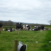 Milk From Forage Farming Note