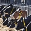 Ration Presentation Farming Note