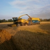 Spring Wholecrop - What are the Options? Farming Note