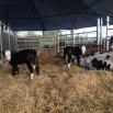 Twinning Farming Note