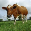 Grass Pests and Diseases