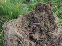 Standard_Soil_Analysis Analysis Services